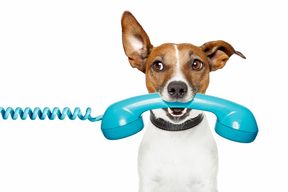 this is a photo of a dog holding a telephone in it's mouth. it just made an appointment with our veterinarian in richmond, tx.
