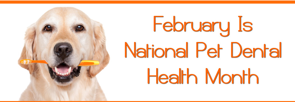 February is Dental Month!